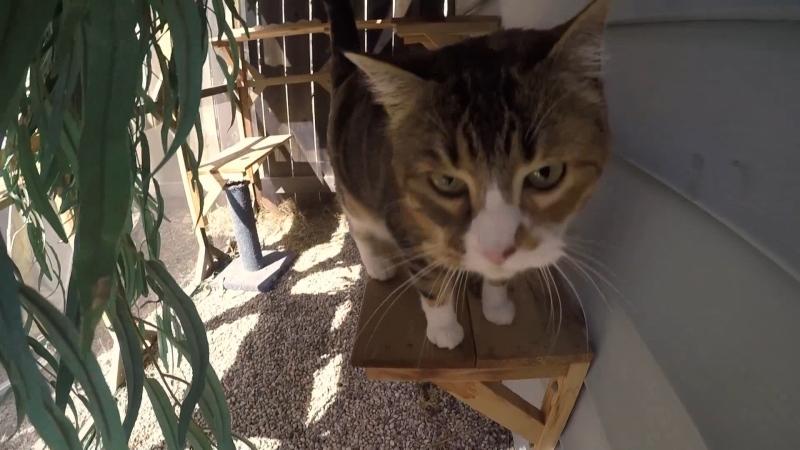 Marissa Lajeunesse, also known as The Winnipeg Cat Carpenter, builds 'catios' – patios for cats. (Source: Jamie Dowsett/ CTV News Winnipeg)