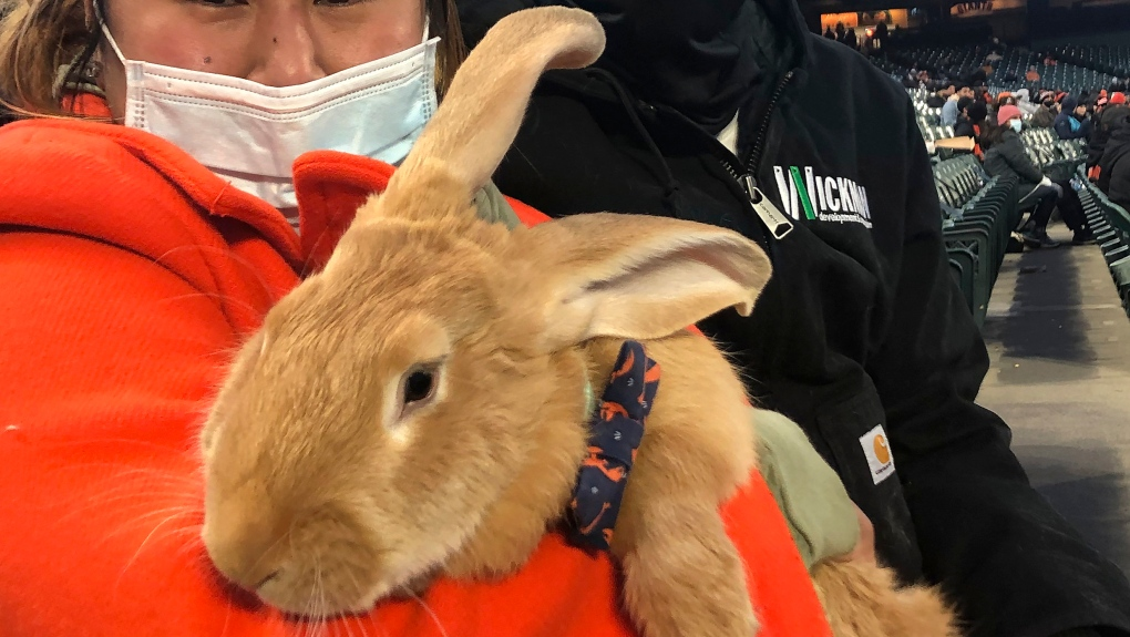 therapy bunny