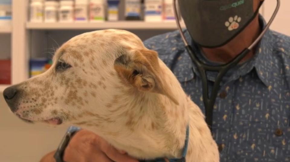 B.C. veterinarian shortage
