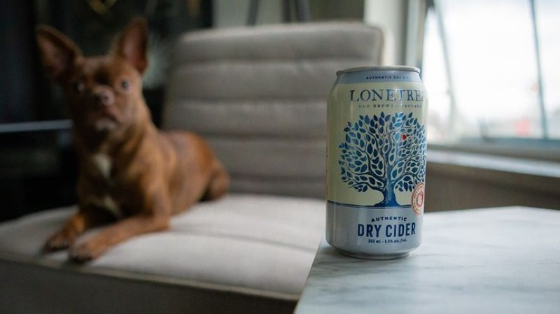 A can of Lone Tree cider sits on a table inside a home, which is the location that those who created the Parks Forever Pack are advising people to consume their beverages from. (Instagram/Lone Tree Cider Co.)