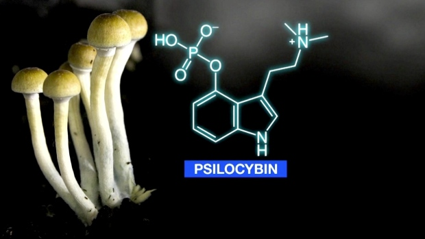 Approval for new psilocybin research facility in Norfolk County