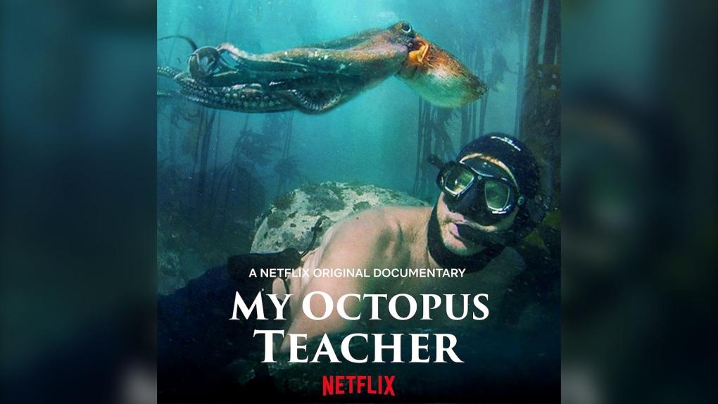 My Octopus Teacher Netflilx