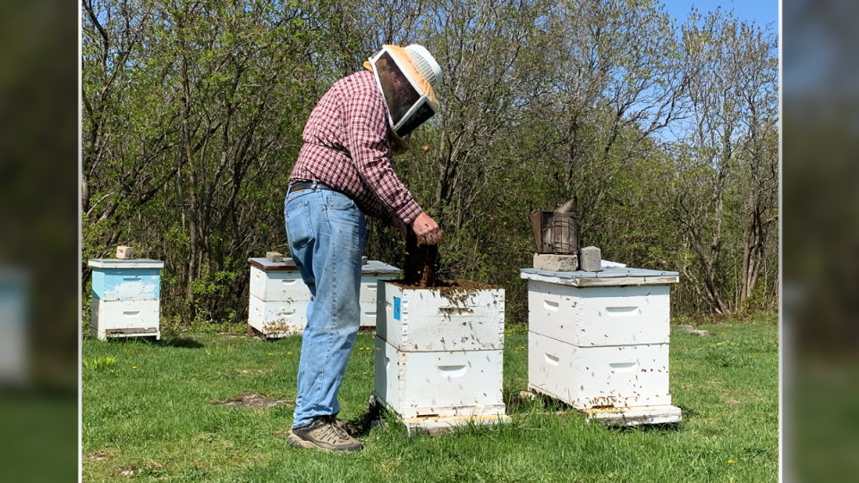 Beekeeping Bill Lake