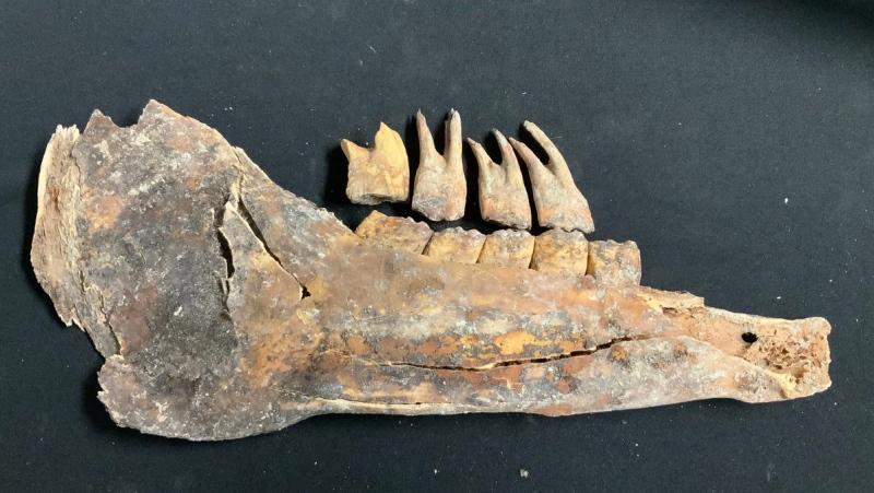 Los fósiles descubiertos pertenecen a los propietarios de la propiedad en la que fueron encontrados
