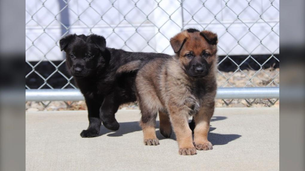 rcmp, puppies, winning, names