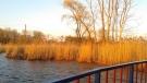 Sunshine in Windsor, Ont. (Courtesy Lira Sykja Okaj)