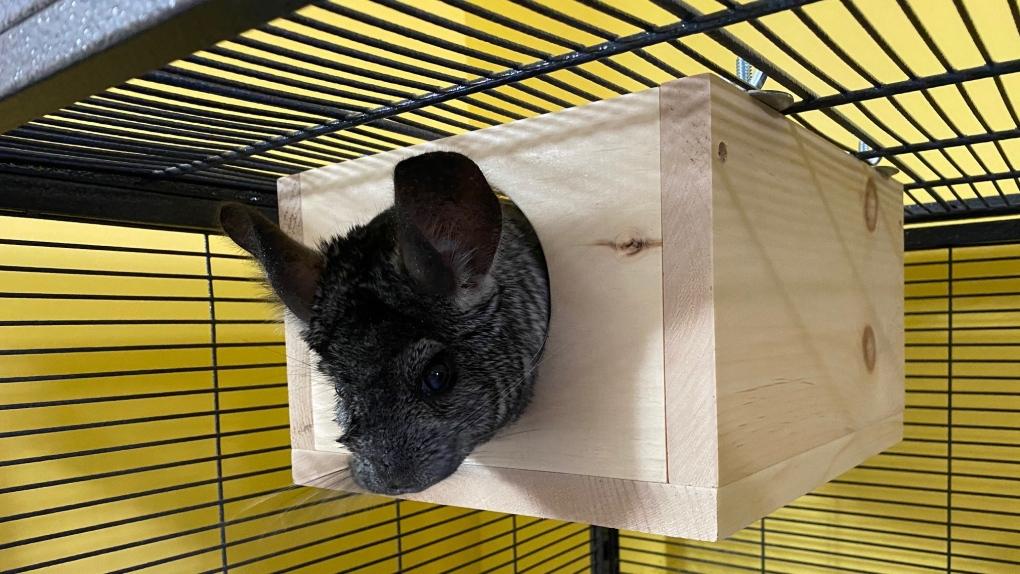 Rodent habitat
