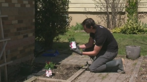 Outdoor gardening with Pure Country's Josh
