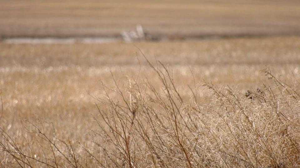 Dry farm Sask.