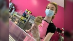 Lindsey Feener is seen making an ice cream cone at Sweet Annie's Bake Shop. Feener said on the weekend, a man came into the store and anonymously purchased 50 ice cream cones for children (CTV News Photo Jamie Dowsett)