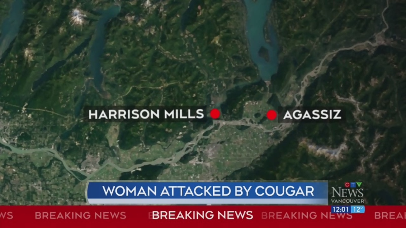 Woman seriously injured after cougar attack