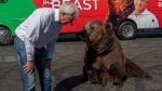 U.S. politician launches campaign event with bear
