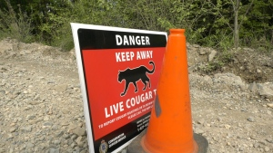 A sign warns the public of a cougar trap set in B.C.'s Fraser Valley on Wednesday, May 5, 2021. (Michele Brunoro / CTV News)