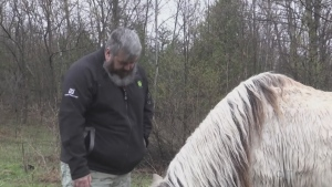Canadian veteran, Mathew Ricard, stands near his horse on his hobby farm west of Owen Sound, Ont. (Roger Klein/CTV News)