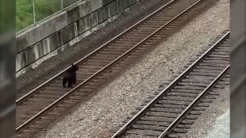 Thomas Cook was working on the Centennial Road overpass construction project at the Port of Vancouver Wednesday when the bear passed by on the train tracks below him. (Thomas Cook)