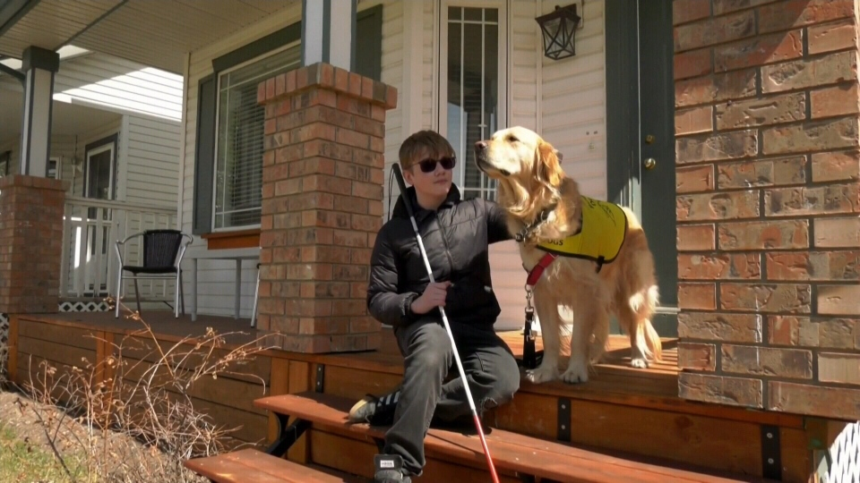 Pressure on guide dog supply