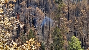 This photo provided by the National Park Service shows what appears to be a smoldering tree in Sequoia National Park, Calif., on April 22, 2021. A giant sequoia has been found smoldering and smoking in an area of Sequoia National Park burned by one of the huge wildfires that scorched California last year. (Tony Caprio/National Park Service via AP)