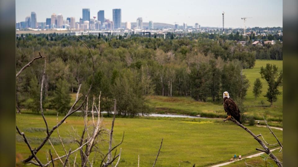 Calgary park