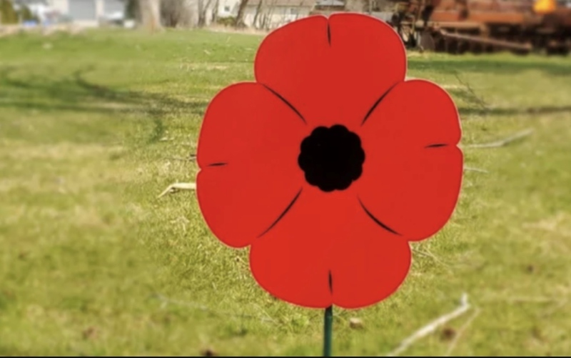 A lawn poppy is seen in this submitted photo.