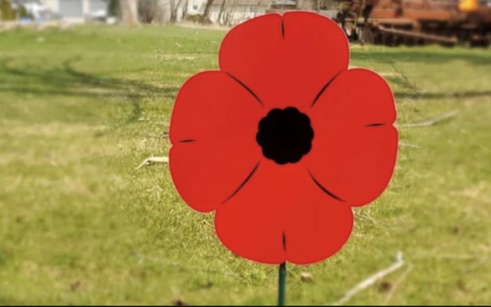 Lawn Poppy