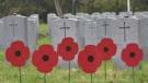 New poppy campaign blooming in London area