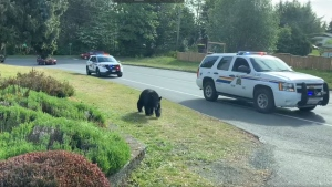 The bear entered the Ladysmith Cemetery where it vanished into the trees, according to the municipality. (Town of Ladysmith)