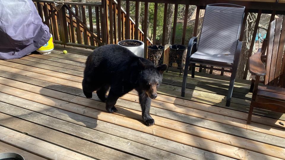 A young bear visits a home on Moose Lake