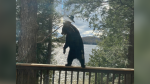 A young bear helps itself to a snack from a bird feeder on Moose Lake in Haliburton, Ont. on Thurs. May 6, 2021 (Brian and Wendy Campbell)