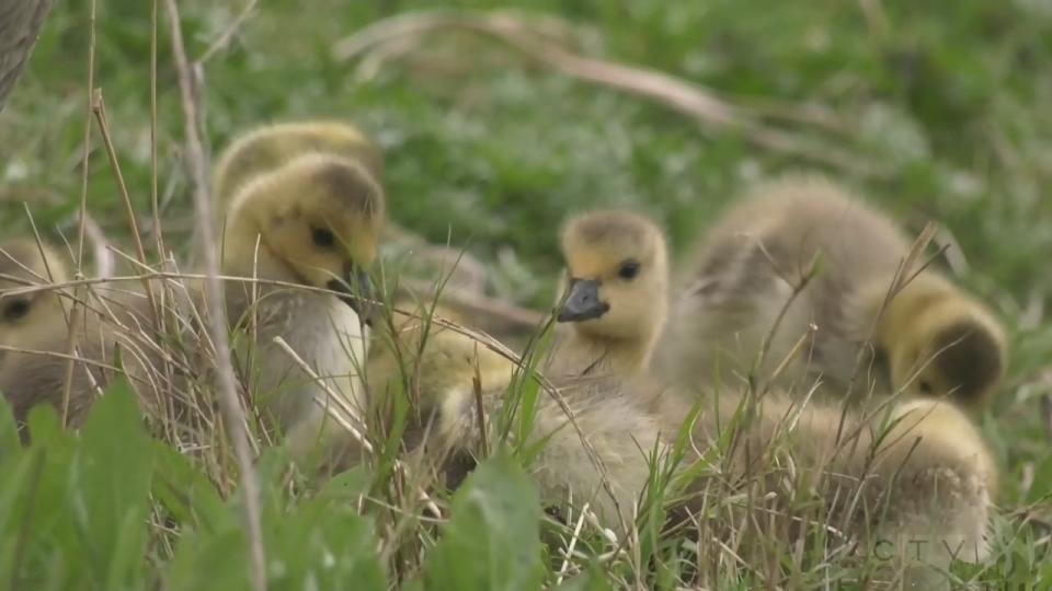 Sawatsky Sign-Off- New Moms