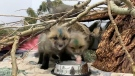 An Alberta wildlife hospital has seen a huge increase in the number of visits this spring. Kevin Fleming reports.