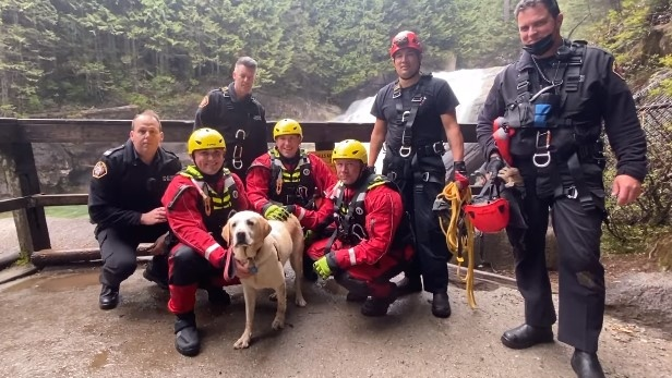 Rex, the golden retriever, poses with Maple Ridge Firefighters after they rescued him from the bottom of a waterfall in Golden Ears Park in B.C. on May 6, 2021. (Facebook/Maple Ridge Firefighters)