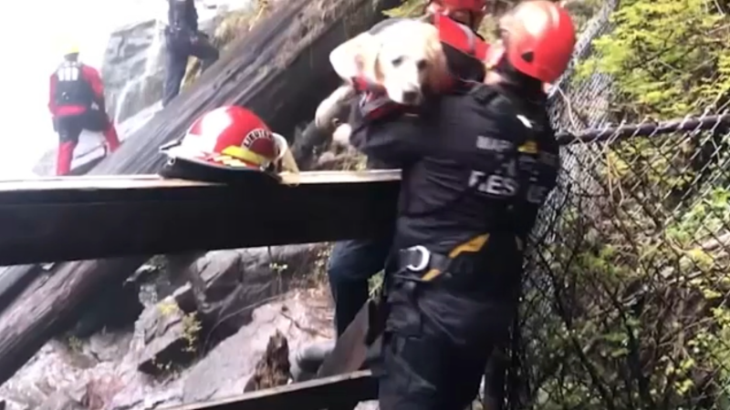 Dog rescued after going over waterfall