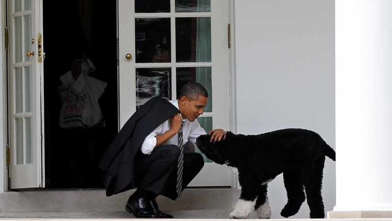 FILE - In this March 15, 2012 file photo, U.S. President Barack Obama pets the family dog Bo, a Portuguese water dog, outside the Oval Office of the White House in Washington. (AP Photo/Pablo Martinez Monsivais, File)