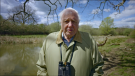 Sir David Attenborough seen in an image taken from a COP26 video message released on May 10, 2021, where the broadcaster and historian said he was 'greatly honoured' to be named COP26's People's Advocate. (Credit: COP26)