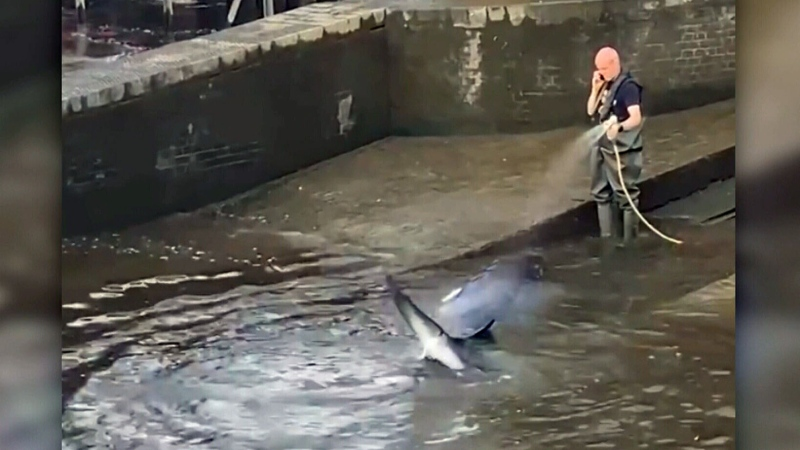 Extended: Whale gets stuck in London's River Thame