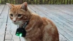 Researchers at the University of Guelph are outfitting cats with camera collars to study how they behave outdoors. (Source: University of Guelph)