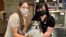 Veterinary assistant Katy Zanluttikhuizen and veterinarian Dr. Laura Palumbo with Sadie on May 10, 2021. (Bryan Bicknell/CTV London)