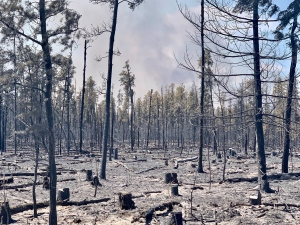 The remnants of a wooded area burned following a fire between Manitoba communities of Sandilands and Woodridge on May 10, 2021 (CTV News Photo Scott Andersson)