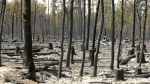 Manitoba wild fire
