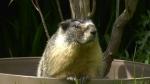 Roger Marmot