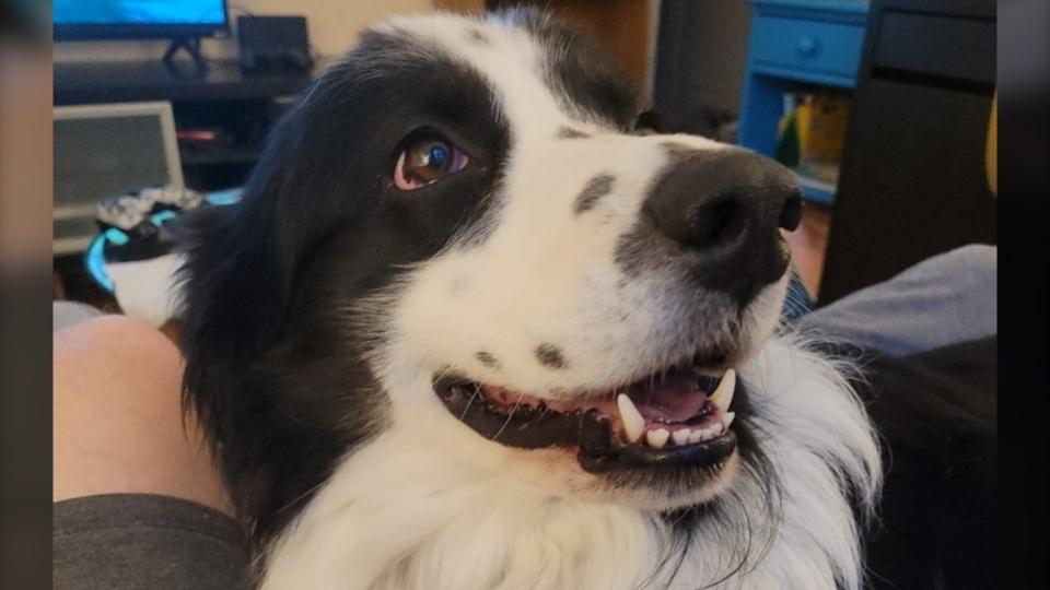 Dog named Panda