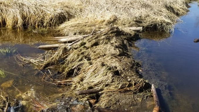 Porcupine Plain RCMP say one or beavers used some fence posts for a dam. (RCMP)