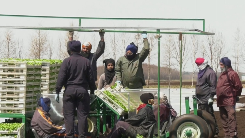 migrant workers, migrant farmers
