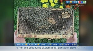 Making your garden more attractive to bees