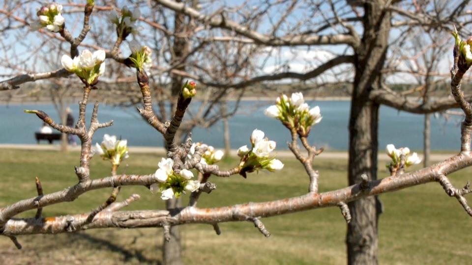 Calgary spring