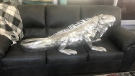 Battleford furniture iguana