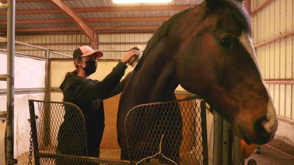 horse, racing, lethbridge