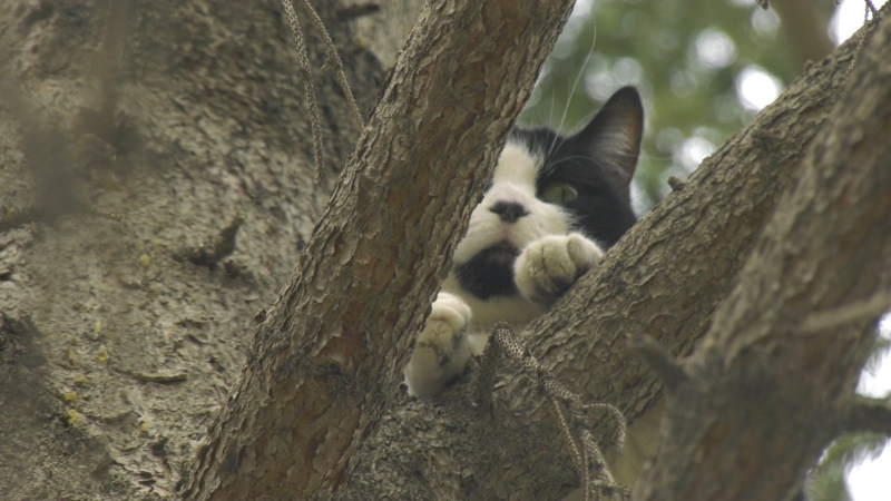A SaskPower worker rescued a cat from a tree Wednesday (Colton Wiens/CTV Regina)