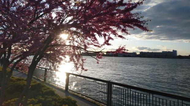 Flowers bloom on the riverfront in Windsor, Ont. (Courtesy Lira Sykja Okaj)