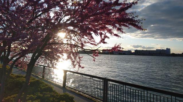 Windsor riverfront